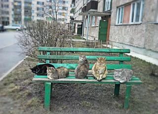 Неужели от котов больше срани, чем от наркоманов?
