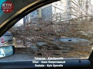 В Киеве упавшее дерево раздавило две машины. Где искать крайнего — не понятно
