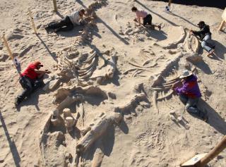 В Китае нашли останки ранее не известного науке динозавра