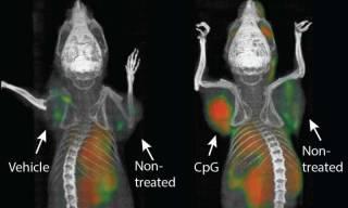 Американские ученые смогли вылечить неизлечимый рак. Правда, пока только у мышей