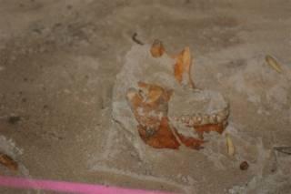 На Карибах нашлись следы цивилизации, которую, как считалось, полностью уничтожили испанцы