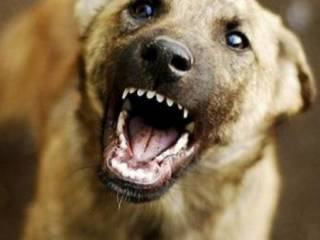 На Донбассе стая собак разорвала на куски девочку, которая шла со школы домой