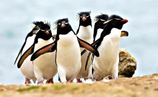 Ученые обнаружили самую большую колонию пингвинов в мире