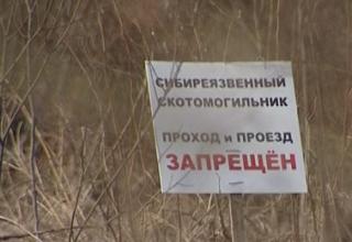 Из-за глобального потепления в России могут вскрыться могильники с сибирской язвой