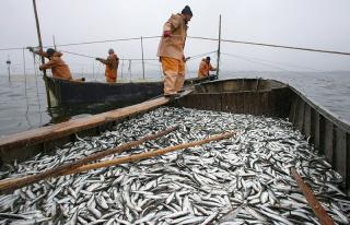 Украинские водоемы могут полностью остаться без рыбы