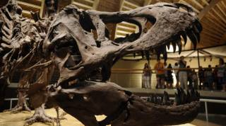 На парижском аукционе продали сразу два скелета динозавров