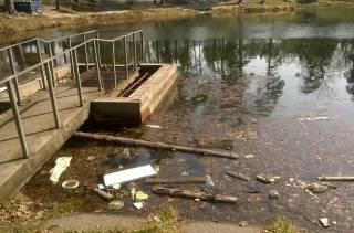 В Пуще-Водице умирает озеро