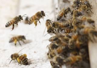 Пчелы не пустили российский самолет в аннексированный Крым