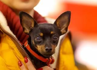 В конце апреля любителей собак ждет яркое киевское шоу