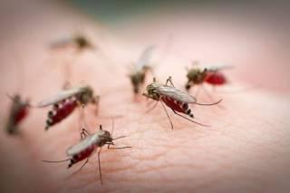Количество комаров в Украине увеличилось аж в три раза