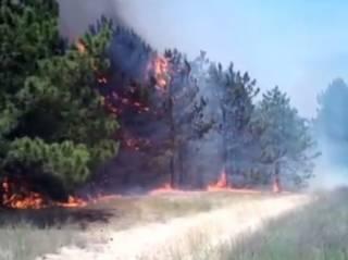 В Херсонской области авиация тушит лесной пожар в национальном парке Олешковские пески