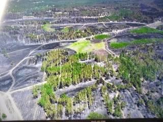 Спасатели назвали причину пожаров в херсонских лесах. За дело взялись военные