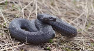 На Харьковщине змея набросилась на мальчика прямо во дворе. Пришлось привлекать авиацию