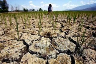 Четверть территории Украины охватила засуха