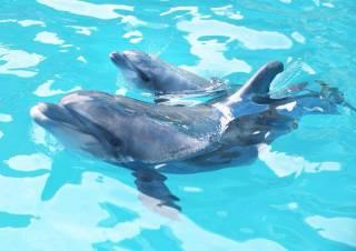 В Одессе во время выступления на глазах у изумленной публики родился дельфиненок