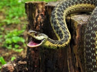 Во Львовской области змеи атаковали жителей местных сел