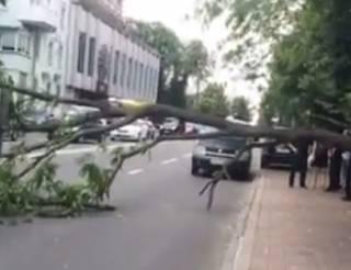 Возле Верховной Рады деревом придавило три автомобиля