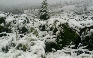 Карпаты завалило июньским снегом. В ГСЧС рассказали, что еще ждать от погоды