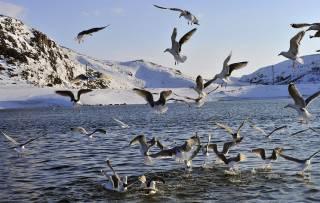 Ученые предупреждают о климатической катастрофе в Баренцевом море
