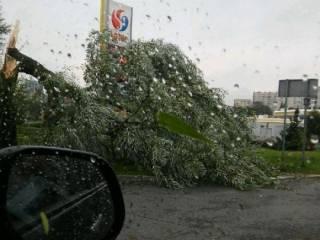 Жителей Киева и некоторых областей предупредили о грядущем урагане