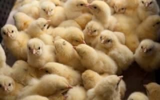 НБУ забрал у Бахматюка оккупированную птицефабрику