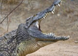 Почти три сотни крокодилов стали жертвами кровавой мести в Индонезии