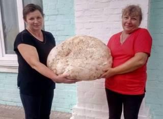 Под Киевом нашли удивительный гриб-великан