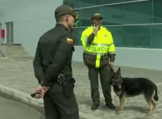 Гроза наркоторговцев: колумбийская мафия назначила награду за голову пса-полицейского