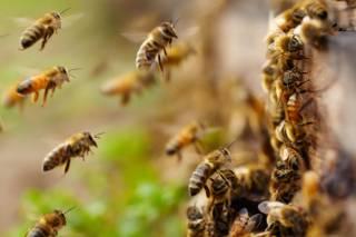В Днепре рой пчел напал на людей и загрыз пенсионера