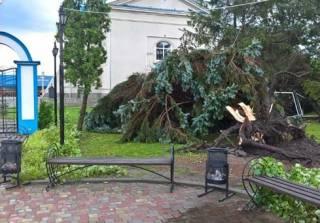 Ураган на Житомирщине ломал деревья и сносил крыши