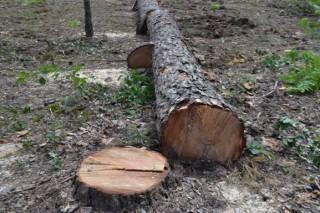 В Украине массово гибнут деревья. Явление уже назвали «биологическим пожаром»