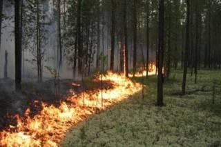 Украинцев пугают пожарами из-за жары