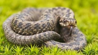 На Львовщине змея отправила в реанимацию четырехлетнюю девочку