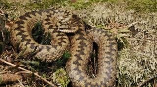 Во Львове от укуса змеи скончалась маленькая девочка