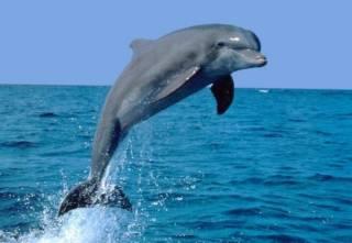 В аннексированном Крыму продолжают убивать дельфинов и массово истребляют рыбу