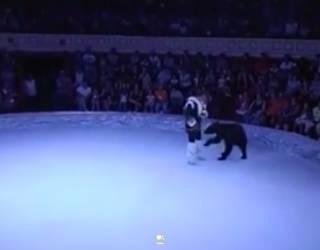 Не выдержав издевательств, медведица напала на дрессировщика в Одесском цирке. Появилось видео