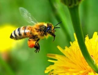 Как оказалось, пчелы и осы таки могут узнавать людей