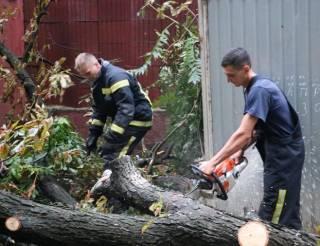 В киевской мэрии рассказали об ущербе, который ночной ураган причинил городу