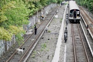 Козы блокировали движение нью-йоркского метро. Появилось видео