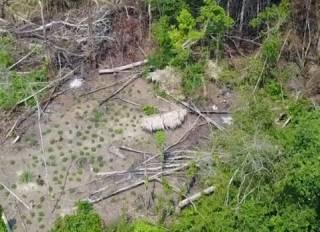 В Бразилии впервые сняли на видео загадочное племя дикарей