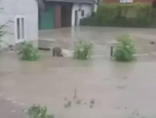 Потоп на Прикарпатье – несколько сел отрезало от цивилизации из-за оползня