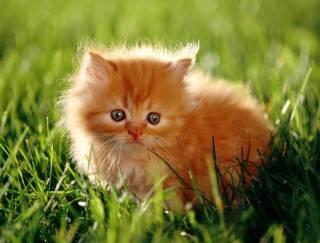 Власти Новой Зеландии решили запретить всех домашних кошек