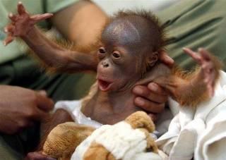 Ученые выявили поразительную схожесть между детьми и обезьянками