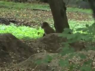 Обезьяна совершила дерзкий побег из винницкого зоопарка, мастерски обманув преследователей