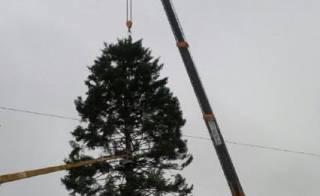 Как оказалось, главная новогодняя елка Украины в этот раз будет какой-то «хиленькой»