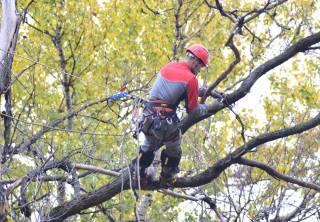 В Запорожской области обрезанная ветка убила проходившую мимо пенсионерку