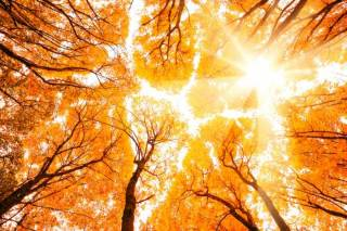 Бабье лето в Украине продолжается: синоптики порадовали прогнозом погоды на неделю