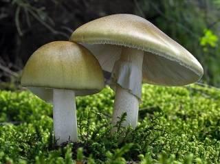 В Херсонской области семья отравилась грибами – отец и его маленькая дочь скончались
