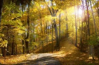 Погода на выходные: по Украине будет тепло и солнечно
