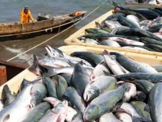 Как оказалось, рыба может стать главной причиной Третьей мировой войны